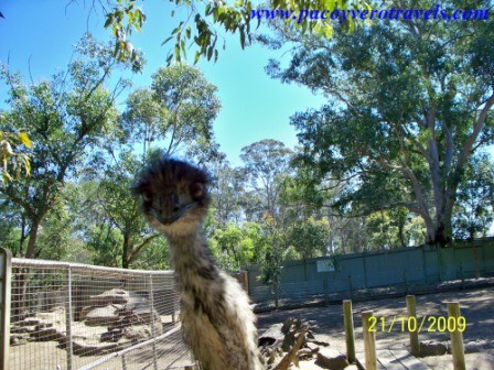 Featherdale Wildlife Park de Sydney