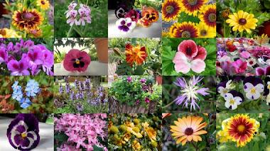 50 plantas productoras de néctar atractivas para las mariposas
