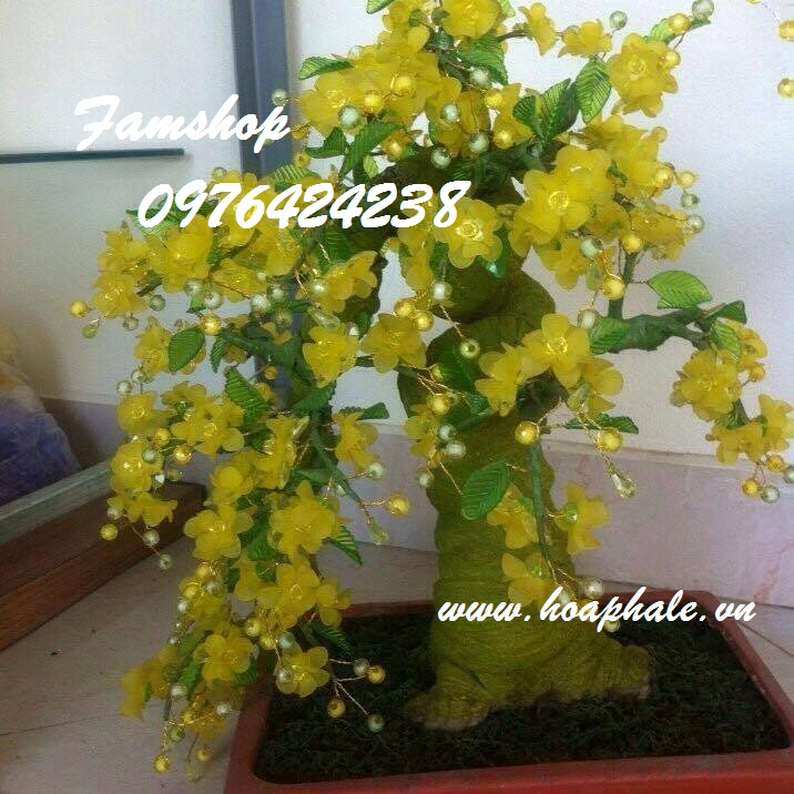 Goc bonsai cay hoa mai o Do Ngoc Du