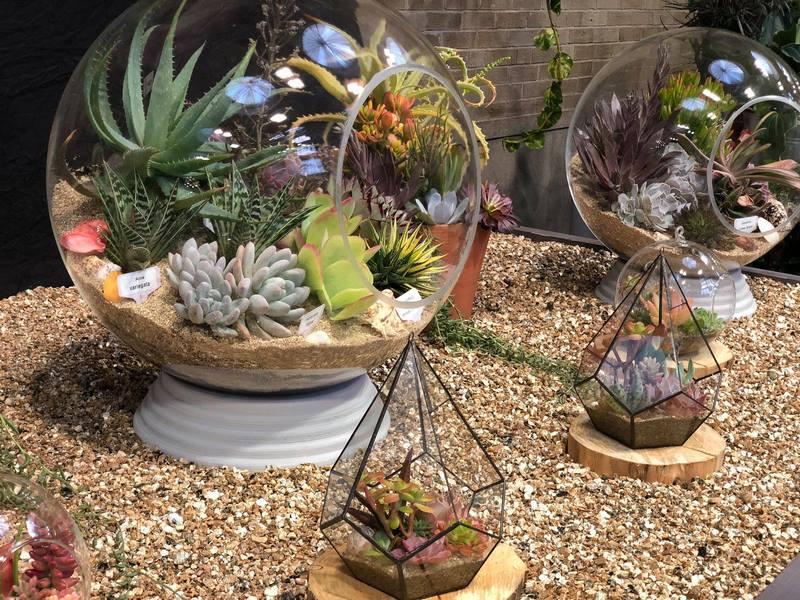 Terrarios con plantas suculentas