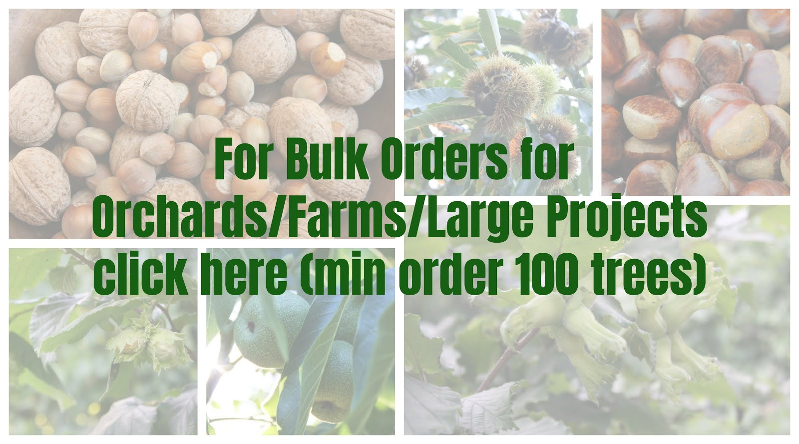 Bulk Nut Tree Orders