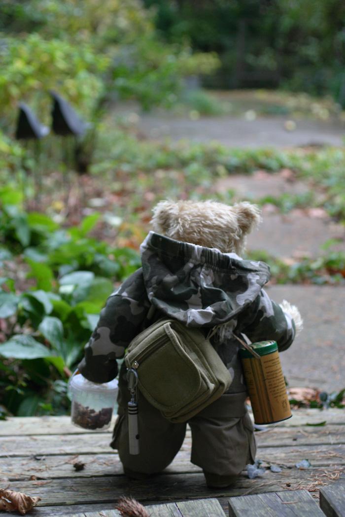 Wars Bären bären in haus garten november 2012