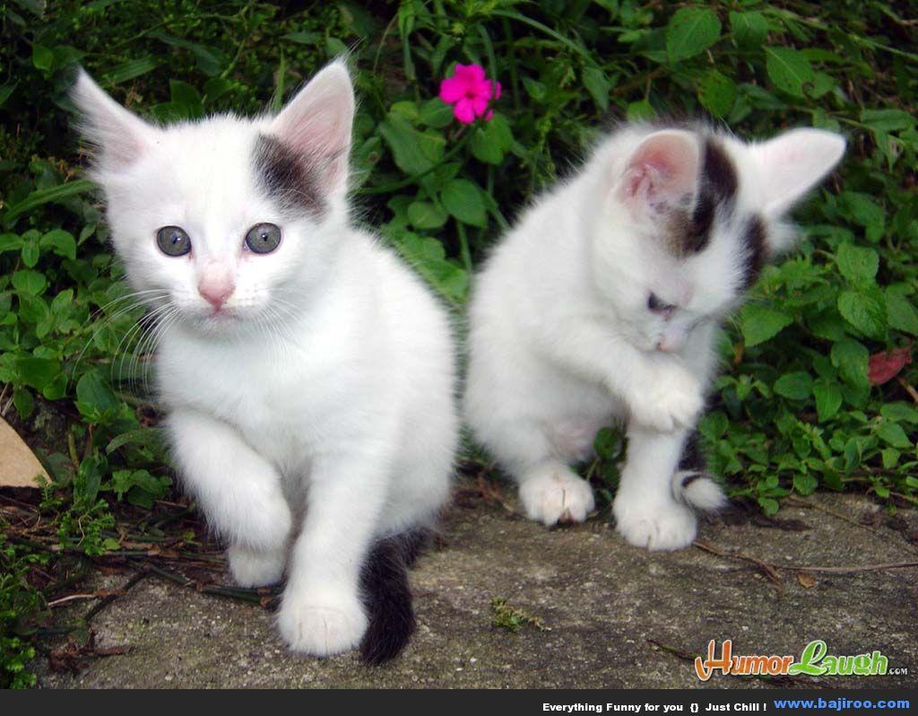 gambargambar luar biasa kucingkucing yang menggemaskan
