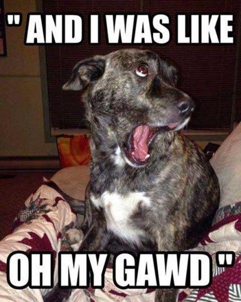 Funny Animal Memes (4)