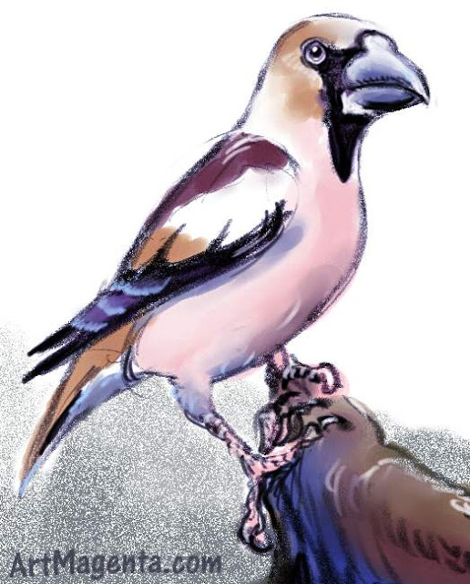 Hawfinch ketch painting. Bird art drawing by illustrator Artmagenta.
