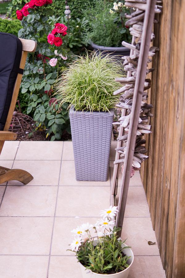 Blog + Fotografie by it's me! | fim.works | Bunt ist die Welt | Garten im Juni 2016 | Margerite im Blecheimer | Honiggras im hohen Pflanztopf