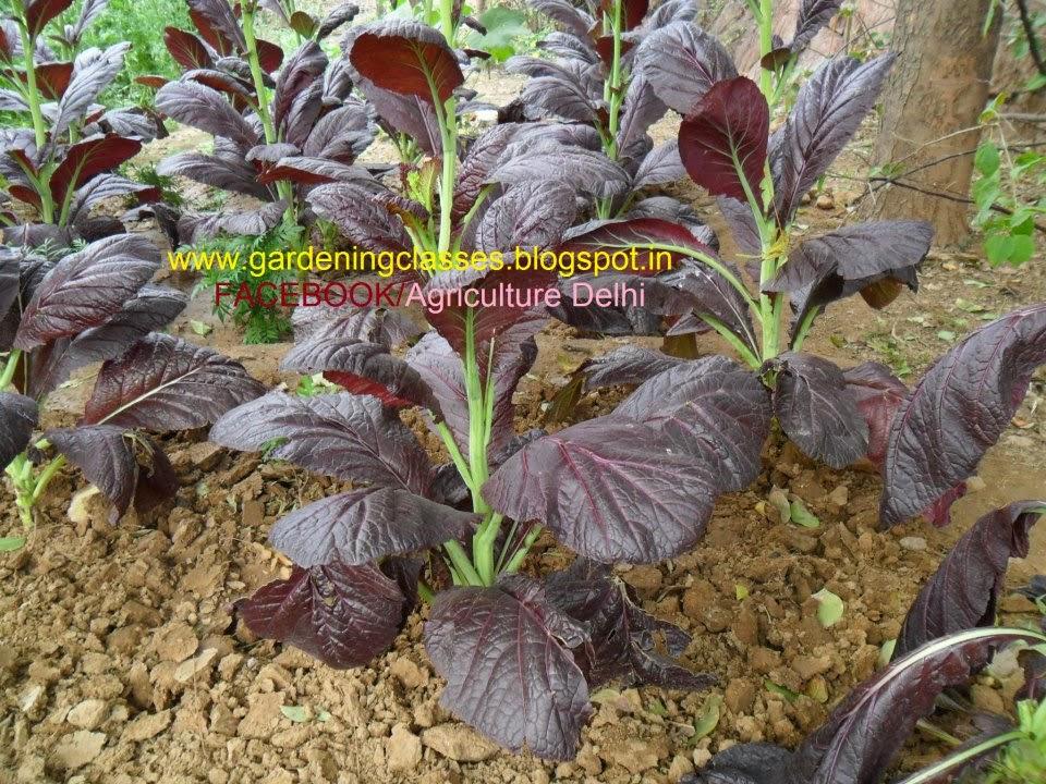 gardeningdelhi Gardening