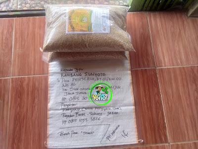 Benih pesanan  BAMBANG SUNYOTO Nganjuk, Jatim.  (Sebelum Packing)