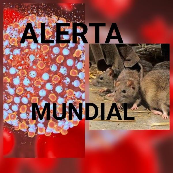 ALERTA MUNDIAL: Reportan El Primer Caso De Enfermdad De Ratas En Humanos.