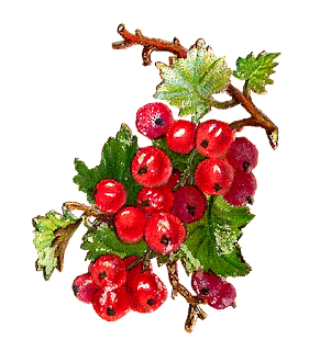 digital fruit currant image