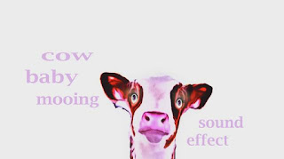 learn how cow animal sounds