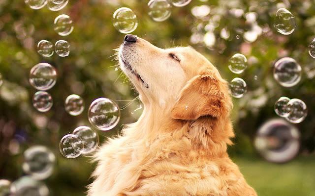 Hond tussen de zeepbellen