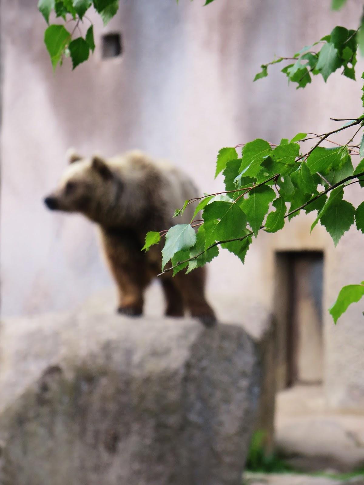 Ähtärin eläinpuisto