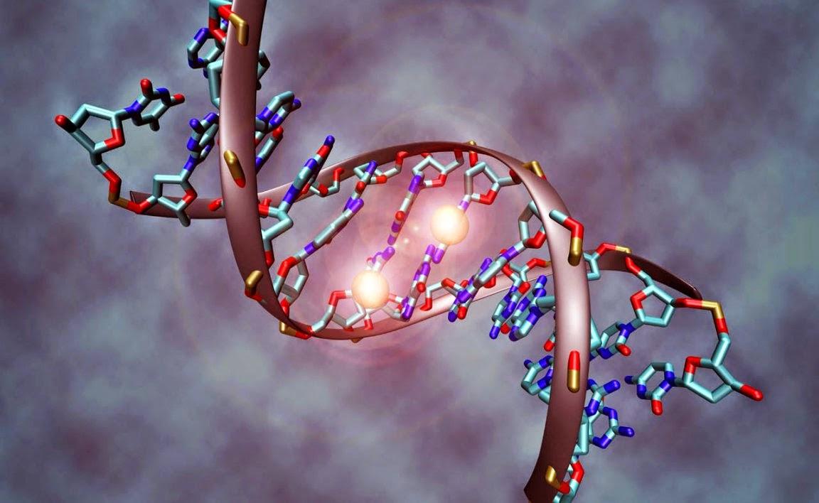 Neodarwinismo y biologia