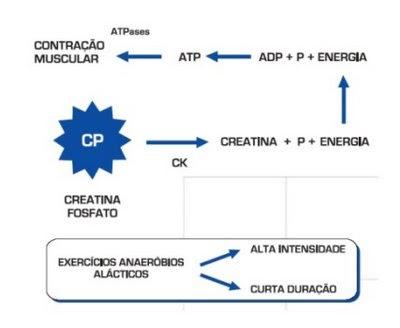 Metabolismo basal Sugerencia Agitarlo