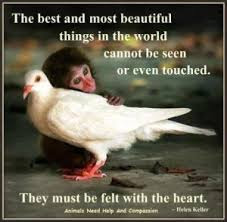 the best and most beautiful things in the world cannot be seen or even touched,
