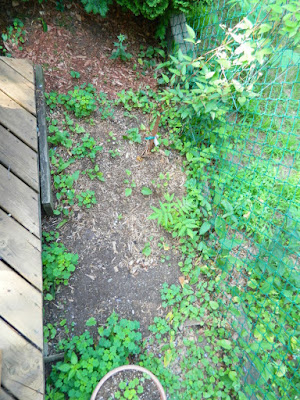 By Paul Jung Gardening Services--a Toronto Gardening Company East York Toronto Backyard Garden Cleanup Before