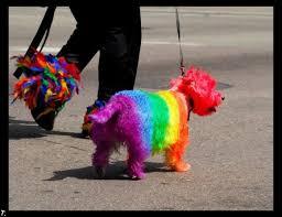 perro arcoiris pequeño