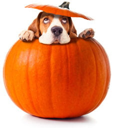 Why Pumpkin is Good for Dogs?