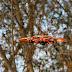 Belgische dronewetgeving eindelijk van kracht