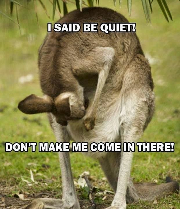 Funny Kangaroo Mother Shouting at her children joke picture