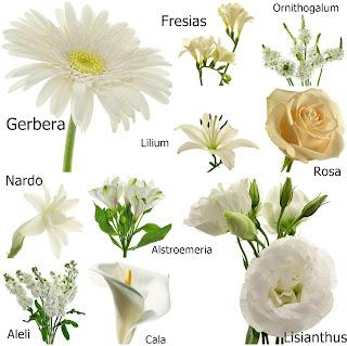 La tia elida - Clase de flores y sus nombres ...