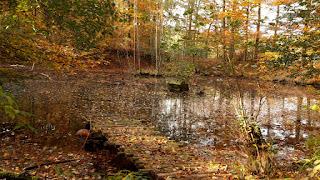 Kassel-Steig W10 im Herbst | www.zeitunschaerfe.de