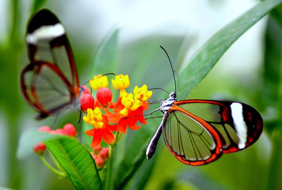 حديقة الفراشات في بينانج