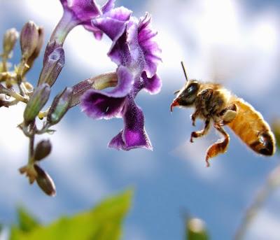 Abelhas, herbicidas, pesticidas, morte de abelhas por agrotóxicos, agrotóxicos, polinização, por que as abelhas estão morrendo, natureza, conservação