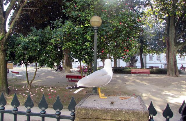 Jardim de São Lázaro Porto