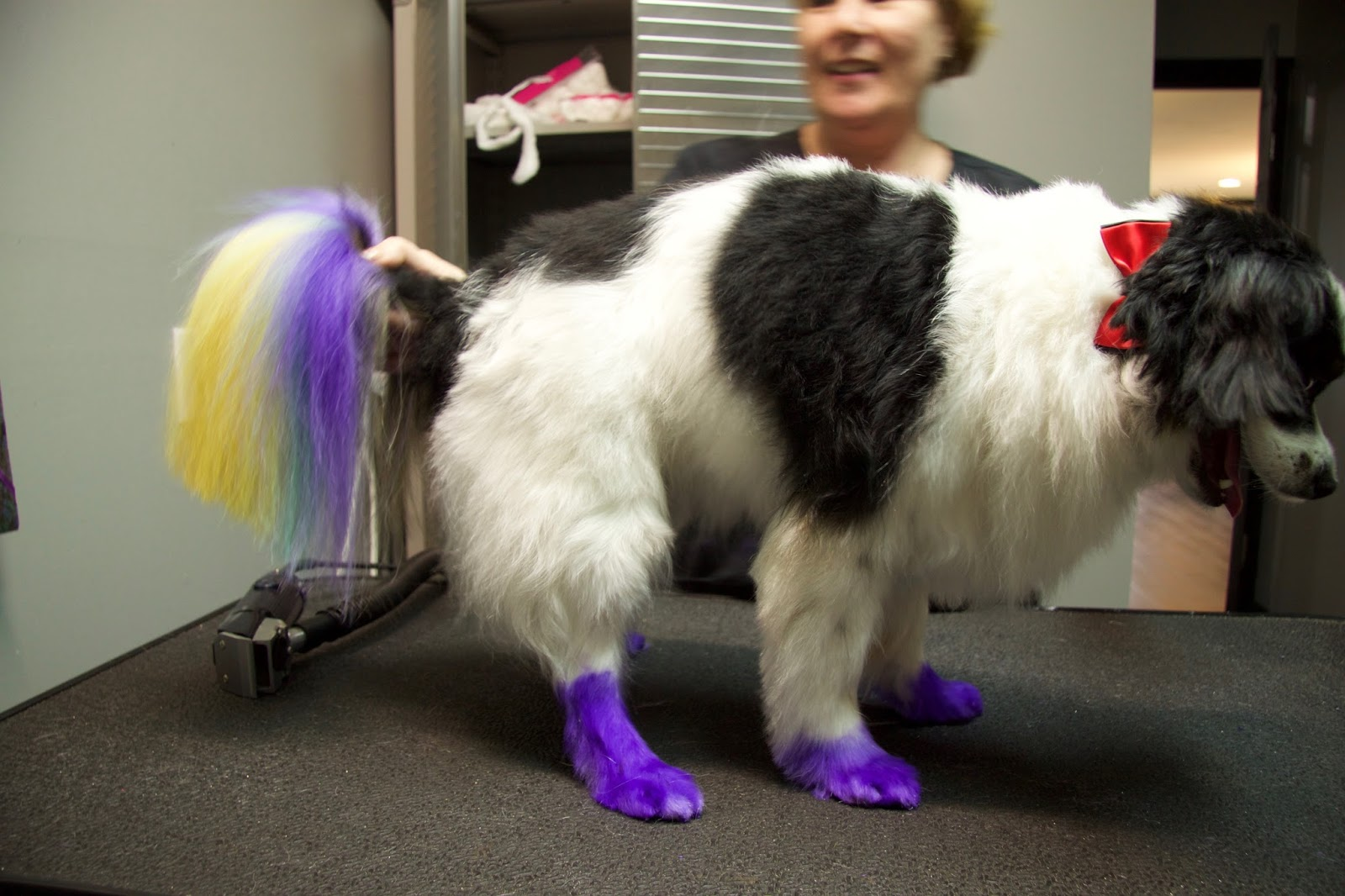 How I Color Dyed My Dog - Frequently Asked Questions   Faris Jaclyn ...