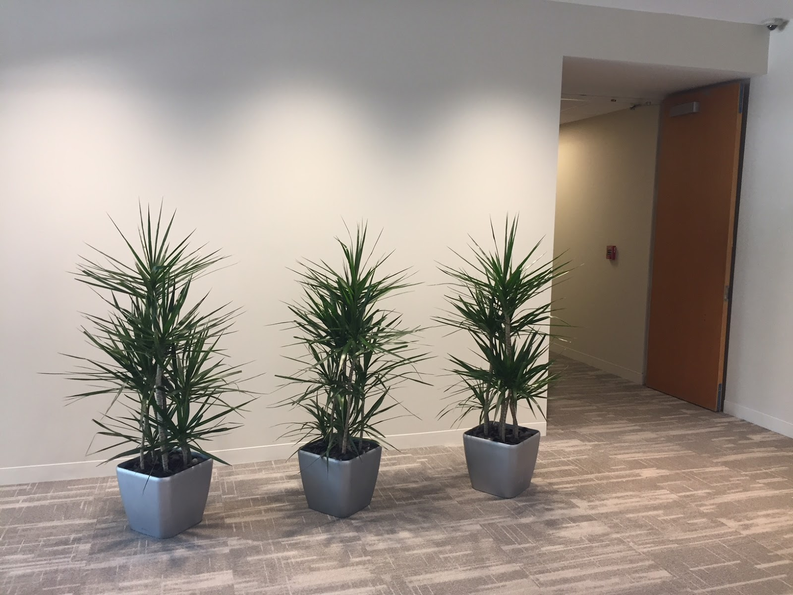Interior Office Plants With Lexington Ma Lobby Interior Office Plants Design By Plantscape Designs Inc Pdi Blog