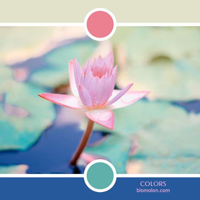variedad_en_color_color_78