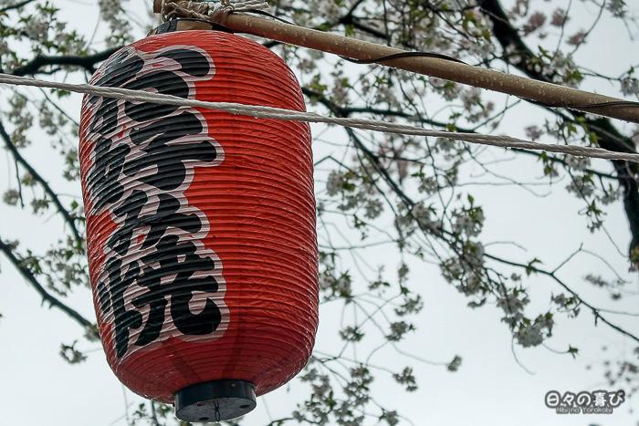 lanterne rouge suspendue parmi les cerisiers