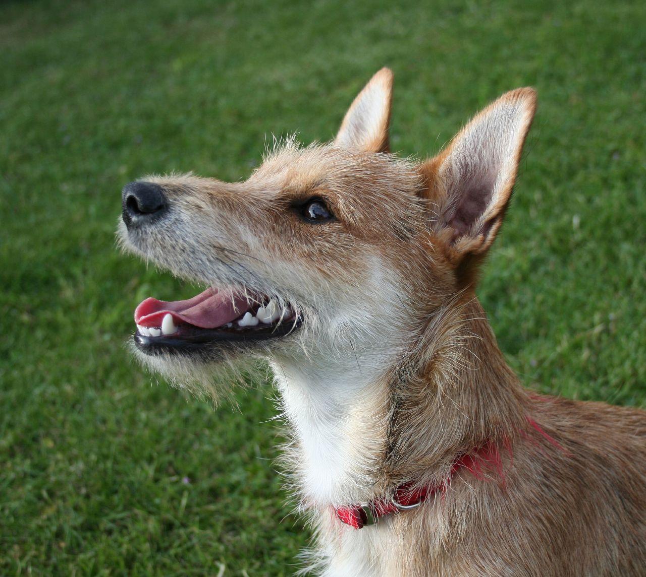 Pet Dog Breed Test