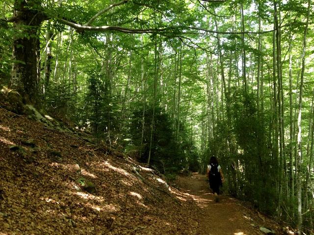 Selva Plana. Añisclo