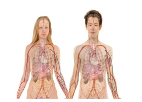 A picture of an anatomy body of a man and woman.