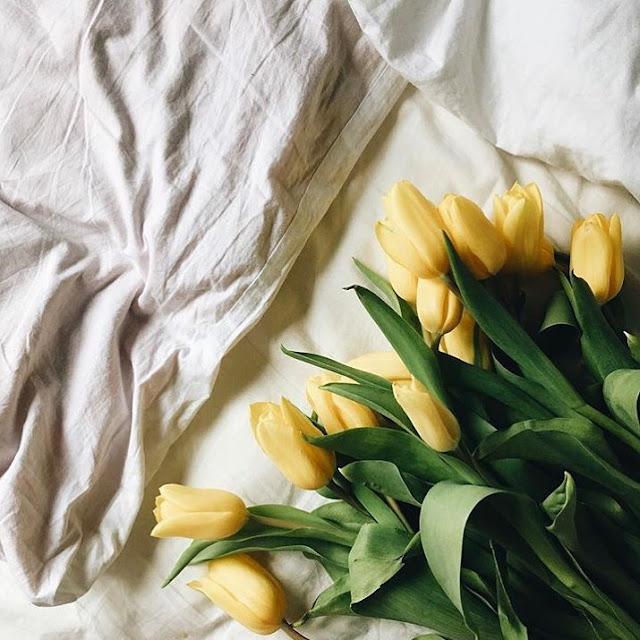 Hình ảnh hoa Tulip vàng & Ý nghĩa của hoa Tulip màu vàng là gi?