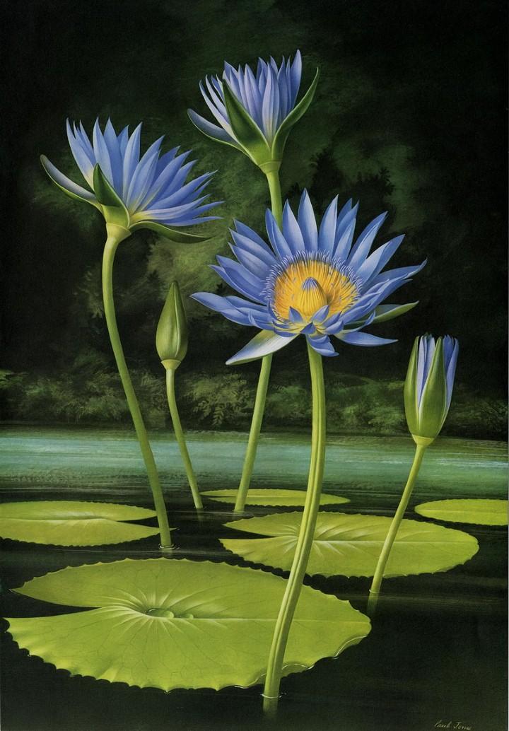 Paul Jones. Акварельные рисунки цветов 11
