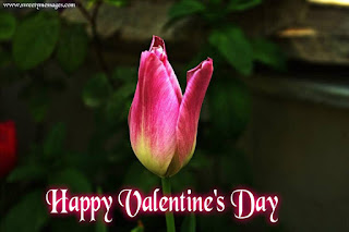 happy valentine day images for whatsapp