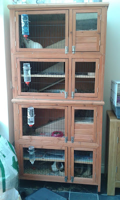 family pets guinea pig indoor hutch