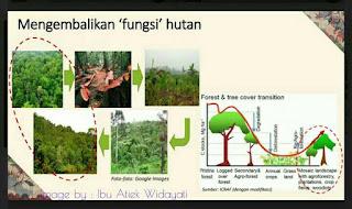 hutan lestari caranya bagaimana, apa arti hutan, apa arti deforestasi, apa arti degradasi, bagaimana agar tidak terjadi perubahan iklim,