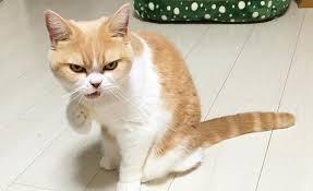 membuat kucing jinak atau manja