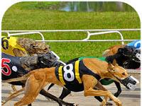 Download Crazy Dog Racing Mod Apk v2.2.9 (Mod Money)
