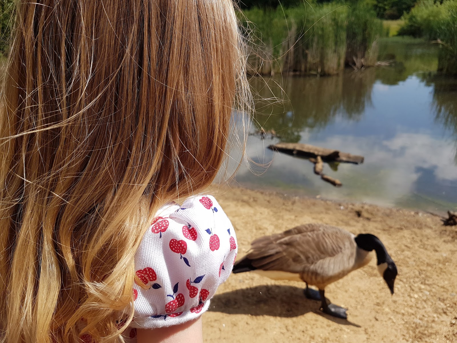 girl feeding geese at epping forest pond