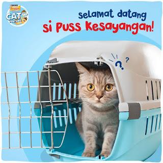 Welcome Pussy Friskies #500Catventure Semarang