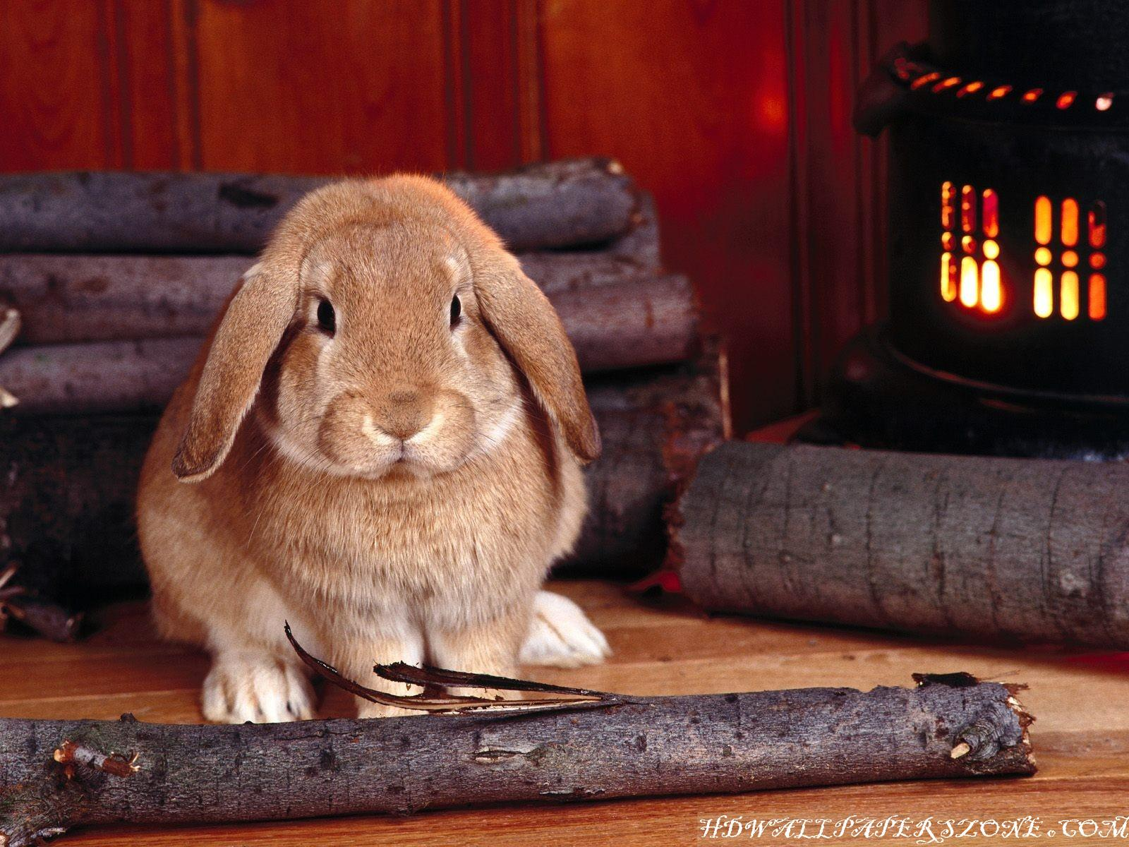https://4.bp.blogspot.com/-3gH_biUlssc/ToBrDf-hb7I/AAAAAAAAAPo/ovZjNed4vjQ/s1600/HD+ANIMALS+WALLPAPERS+%252828%2529.jpg