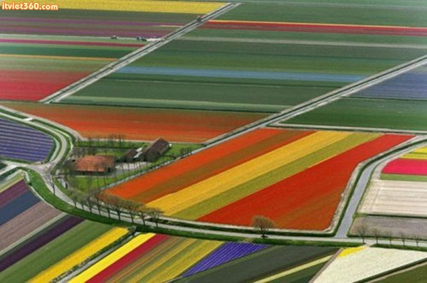 Tulip fields, somewhere in The Netherlands