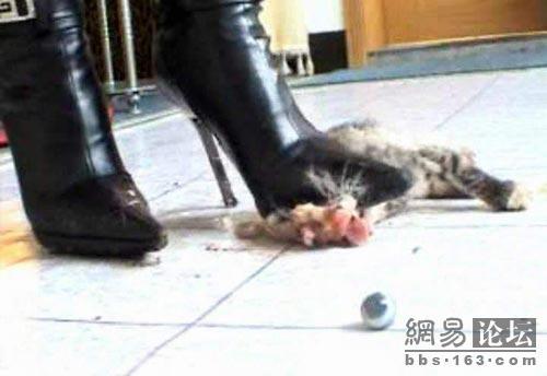 Kitten and high heels fetish