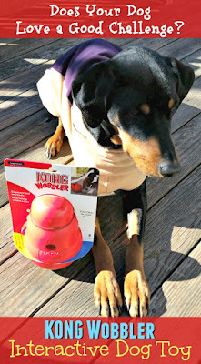 rescued doberman mix dog with interactive kong toy